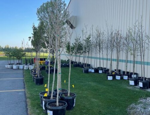 1000Trees Grinnell Plans Fall Planting Event